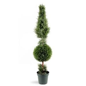 National Tree Company 60 in. Juniper Cone and Ball Topiary Tree in Green Round Plastic Pot LCYT4 700 60
