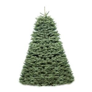 2 ft.   4 ft. Fresh Cut Great Northwest Noble Fir  Sold Out for the Season   DISCONTINUED TRN 20024 WK7