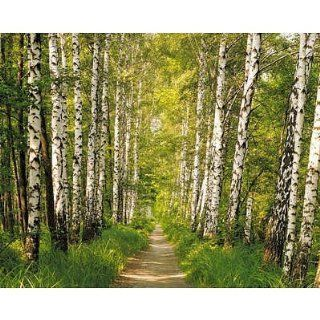 (100x145) Birch Tree Forest Path Wall Mural   Prints